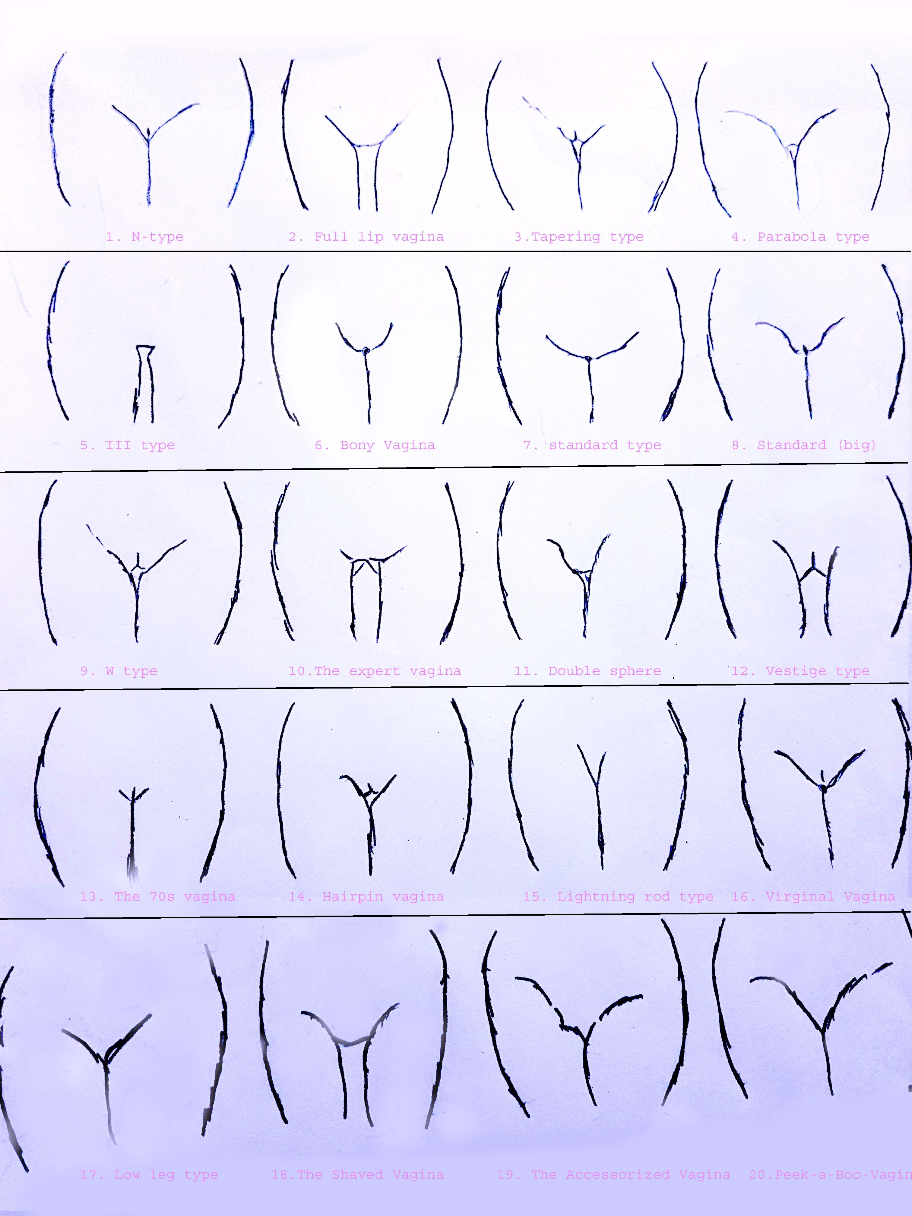 What are different shapes of pussy